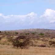 Umfolozi  - Hluhluwe - krajobraz parku
